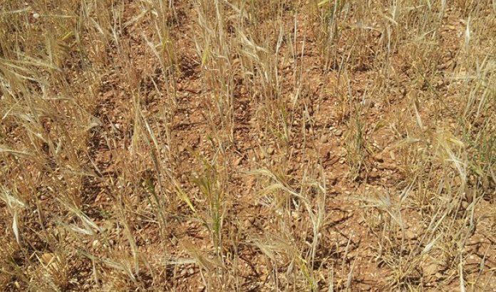 Asaja pide a la Junta que abone ya las ayudas a los intereses de préstamos de la sequía pedidos en 2017