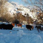 caballos en la nieve