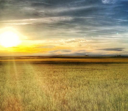 Las seis noticias agrícolas de la semana