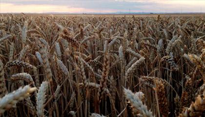 Agricultores a vota, agricultoras a misa