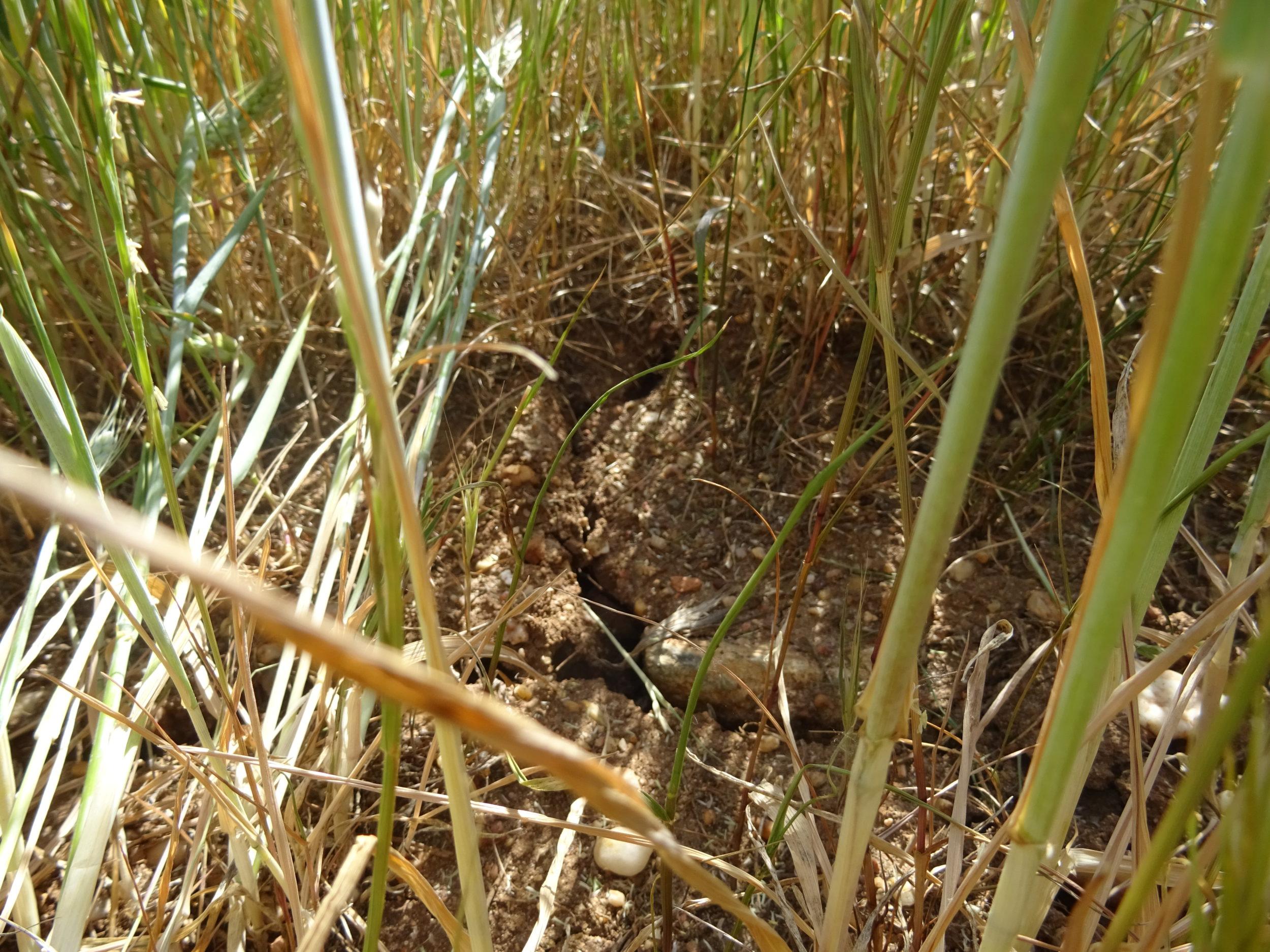Cereal (trigo), en la provincia de Salamanca. FOTO: Verónica G. Arroyo