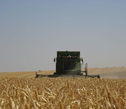 Una explotación de cereal, en Valdecarros, Salamanca. FOTO: Verónica G. Arroyo