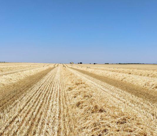 Campo cosechado. FOTO: ASAJA Salamanca