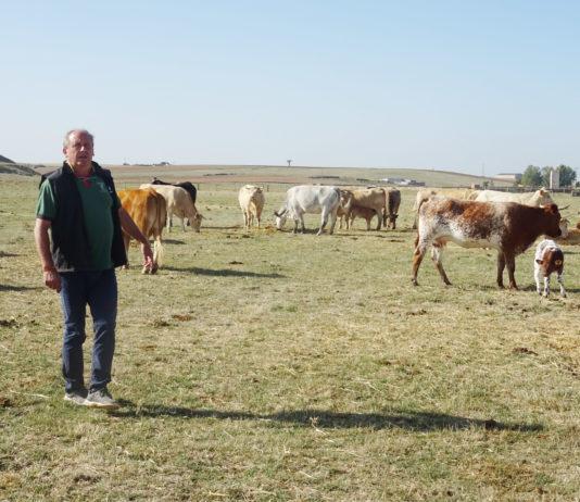 Un ganadero, en la provincia de Salamanca. FOTO: Verónica G. Arroyo