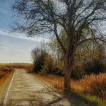 Campo y carretera