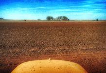 Campo y tractor