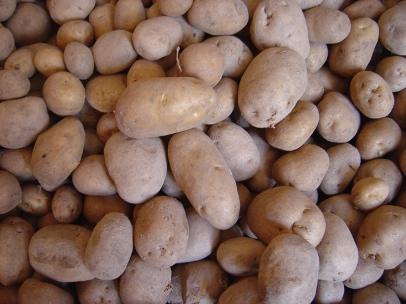 La mala campaña de patata reactiva la necesidad de una interprofesional