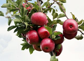 El sector de la fruta dulce reclama medidas de apoyo urgentes para que los productores.jpeg