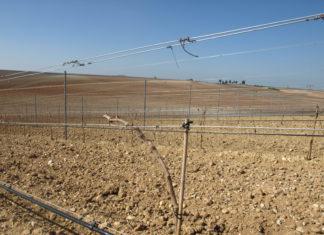 Nuevas plantaciones de viñedo, hasta el 28 de febrero
