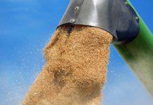 ASAJA exige que Castilla y León se beneficie de la tendencia alcista del precio del cereal