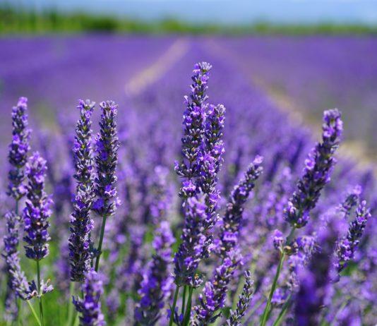 Jornada sobre el cultivo de plantas aromáticas