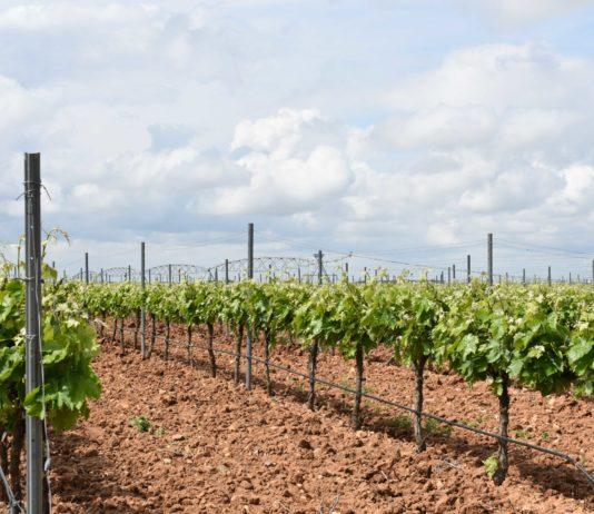 ASAJA VALLADOLID recurre a la Junta de Castilla y León contra el acuerdo de la D.O. Rueda, por el cobro de tasas a los viticultores