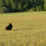 Mayor flexibilidad en la caza del conejo