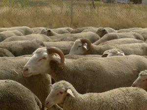 ASAJA recuerda a los ganaderos que antes del 3 de octubre deben disponer del nuevo libro de explotación ganadera