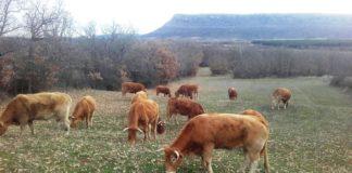 ASAJA lamenta la corrección financiera por el CAP y pide que no perjudique a los ganaderos