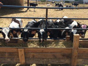 ASAJA considera insuficiente el paquete de medidas UE para el lácteo y pide a Ministerio y Junta que lo complementen con presupuesto propio