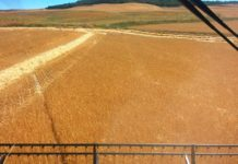 Estimaciones cosecha de cereal 2016 en Castilla y León: la producción sube un 34%