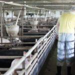 ASAJA denuncia la ineficaz política de la consejería de Agricultura en el apoyo al seguro agrario y ganadero
