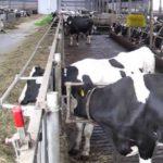 Los ganaderos del resto de Europa tienen un margen de tres céntimos de € por litro de leche para competir con los españoles