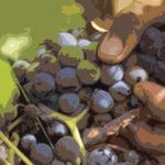 Uvas y mano