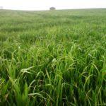 """El campo celebra mañana San Isidro Labrador """"expectante"""" para que cuaje la situación favorable de los cereales"""