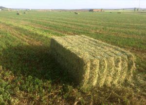 El campo de Castilla y León corona San Isidro con gran incertidumbre sobre la evolución del cereal de secano