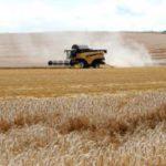Ola de calor: la Junta pide extremar las medidas de precaución en la recolección de cereal