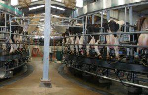 Los ganaderos de Castilla y León siguen excediéndose en su cuota láctea