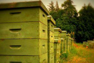 ASAJA insiste ante el ministerio en la necesidad de un nuevo etiquetado para la miel que refleje el país de origen