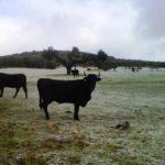 El sector agroganadero nacional se une para que la nueva PAC no ignore a la ganadería extensiva