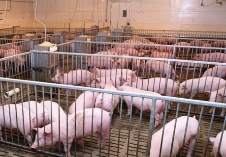 ASAJA pide a la Junta que convoque ya la ayuda al seguro de retirada de cadáveres animales