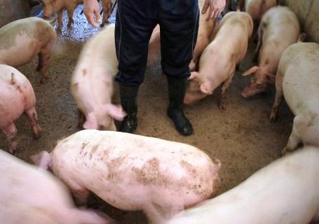 ASAJA pide a la Junta que la recogida de cadáveres de animales sea un servicio público que se explote bajo concesión administrativa
