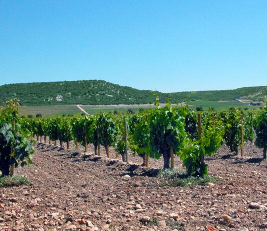 El Sector vitivinícola europeo se la juega este viernes en Bruselas