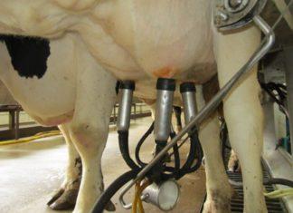 """ASAJA valora la aprobación del nuevo """"paquete lácteo"""" y pide a la administración que garantice su cumplimiento"""