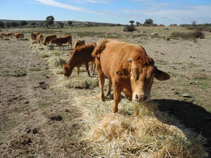 En ganadería se deja de recibir ayudas cuando se cierra la explotación; en agricultura